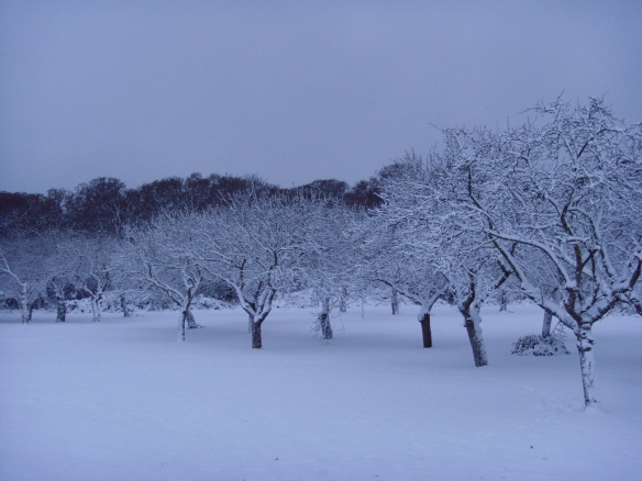 Orchard at the edge of Claybury Park